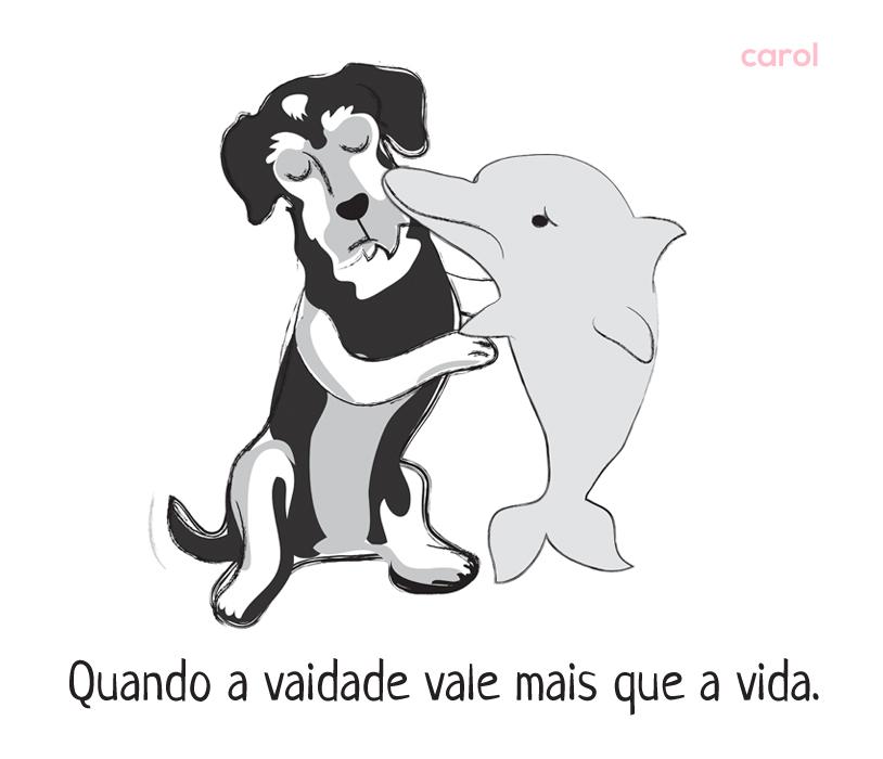 carol_golfinho